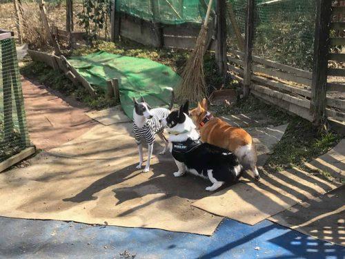 ドッグランでのアスターと2匹の犬の写真
