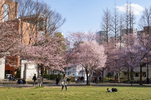 錦町公園の全景の写真
