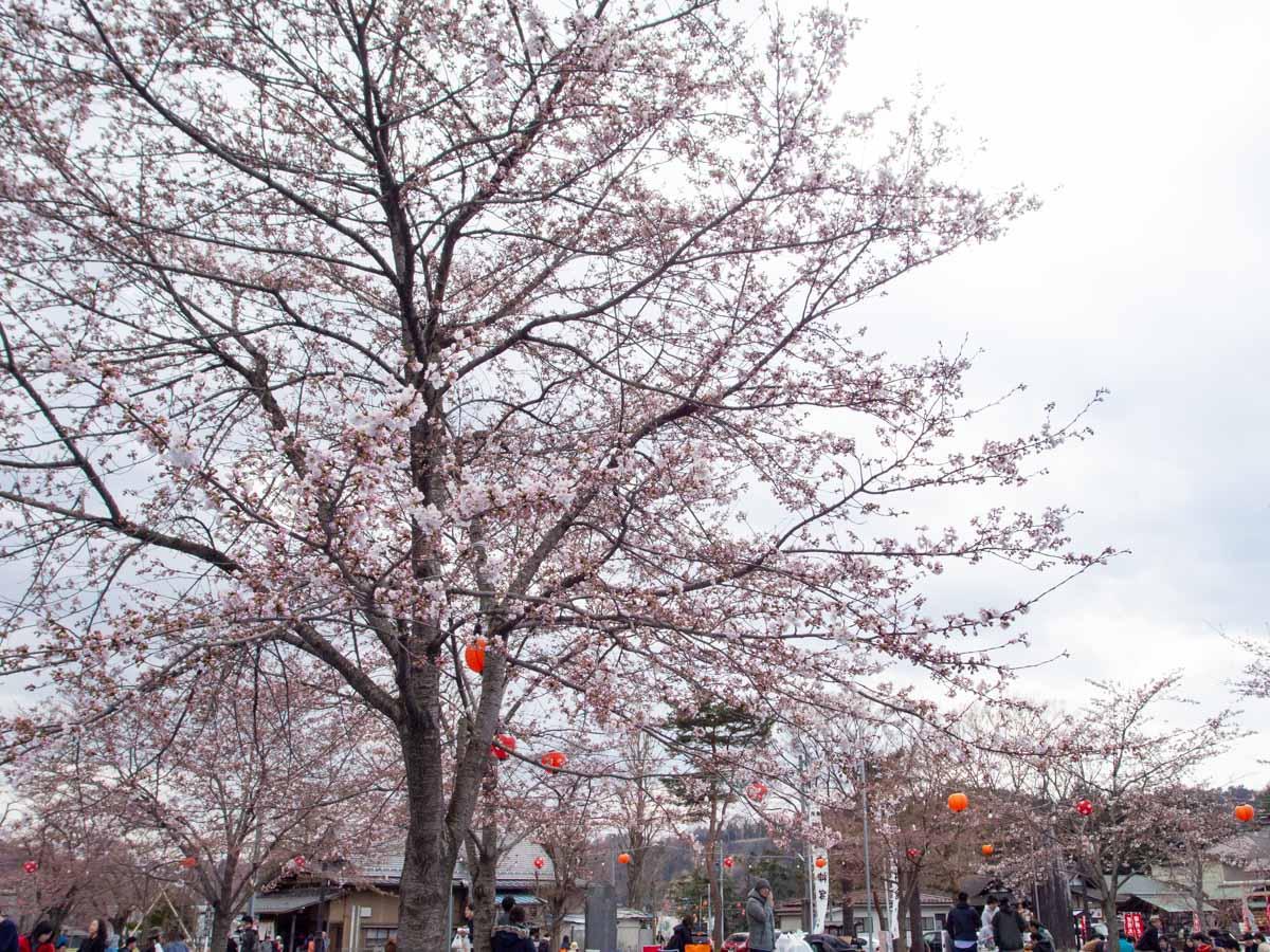 西公園のお花見の写真