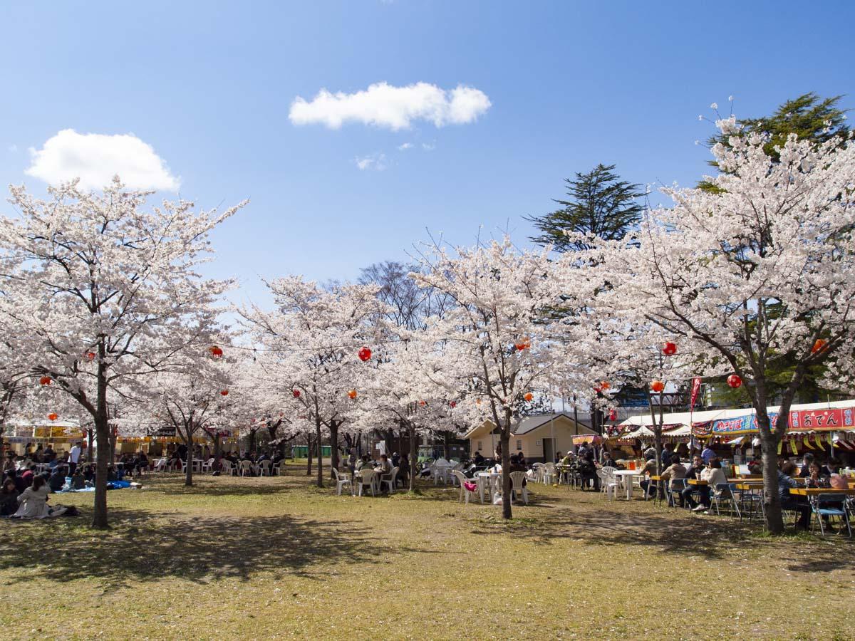 西公園のお花見の様子の写真