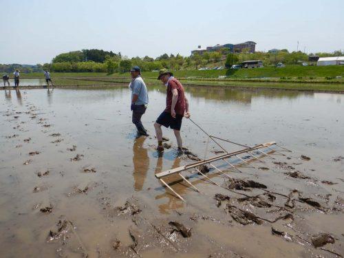 田植えの線引きの工程の写真