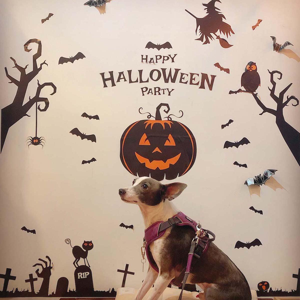 ハロウィン仕様の壁とアスターの写真