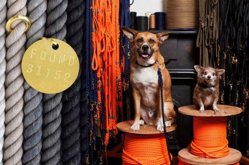 ファウンドマイアニマルと2匹の犬の写真