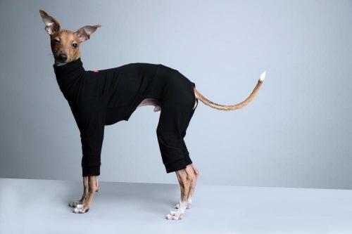 スリムヒートを着た犬の写真