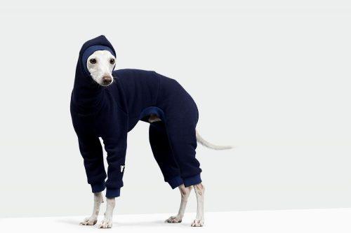 スピードスーツを着た犬の写真