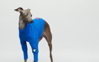 vemvemカットアウェイブルーをきた犬の写真