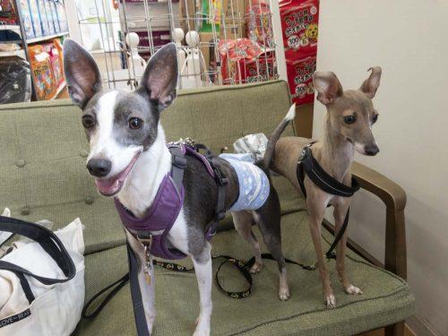 動物病院のアスターとステラの写真