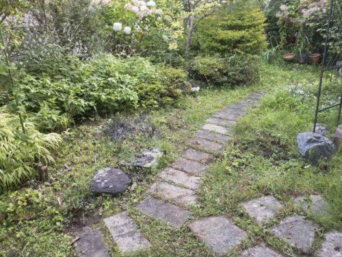 雑草だらけの庭の全景の写真