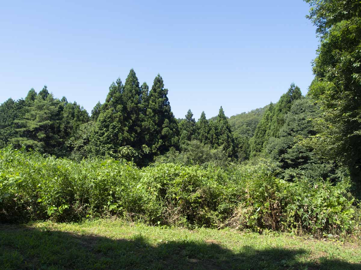 柴田町大字葉坂雷の山林の風景写真