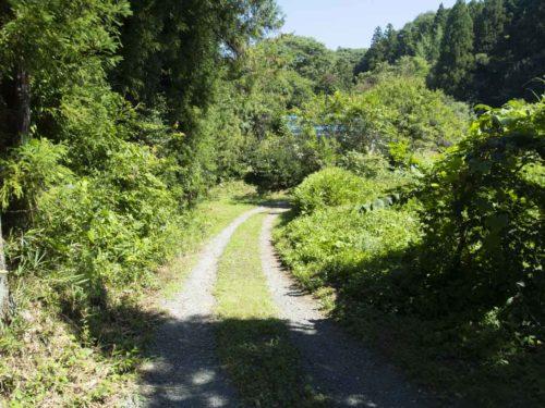 ジェームス オペさんの工房への道の写真
