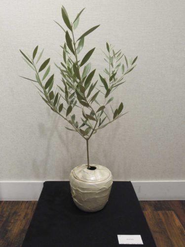 オリーブ用の鉢の写真