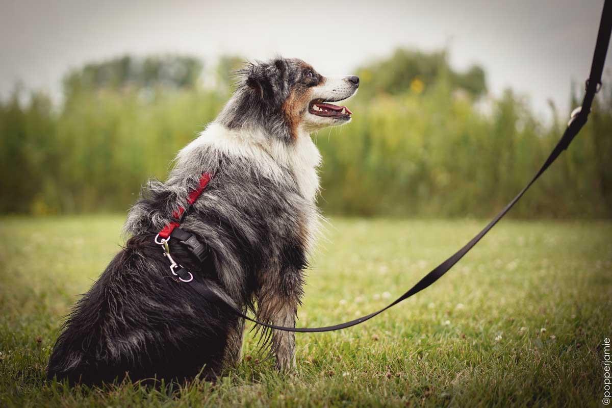 バランスハーネスを着けている犬の写真