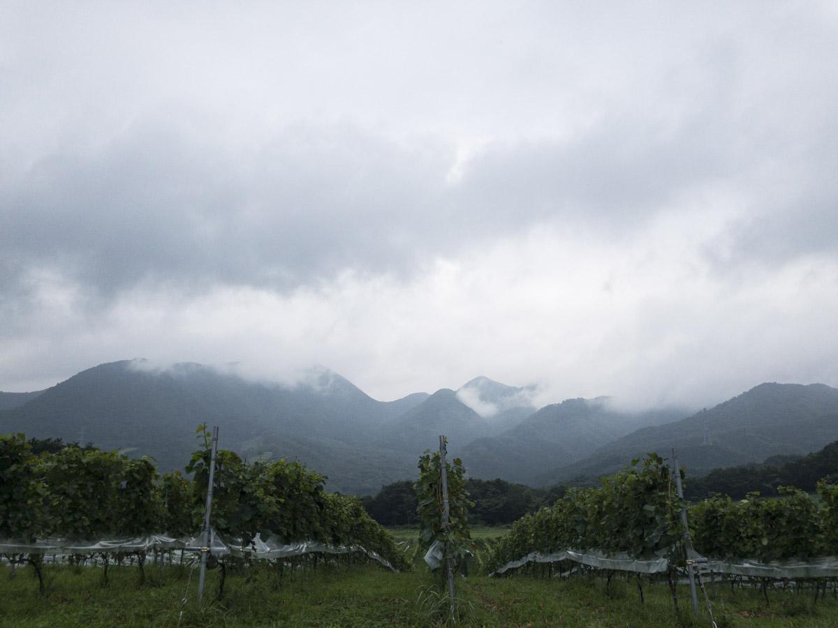 了美 Vineyard and Wineryからの山並の眺めの写真