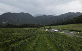 了美 Vineyard and Wineryのブドウ畑の写真